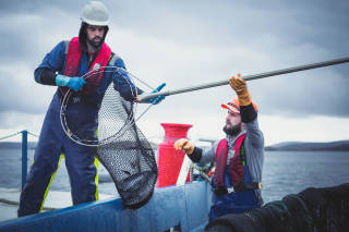 Workers passing a salmon in a net