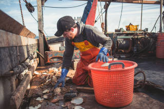 Worker picking up scallop shells