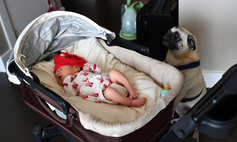 Baby en uw huisdieren