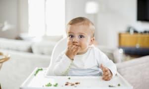 Eiwitten en gepureerde hapjes: baby diversifieert zijn dieet