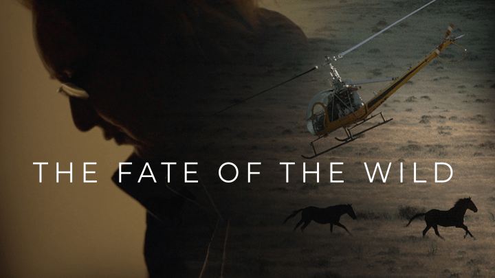 The Fate Of The Wild