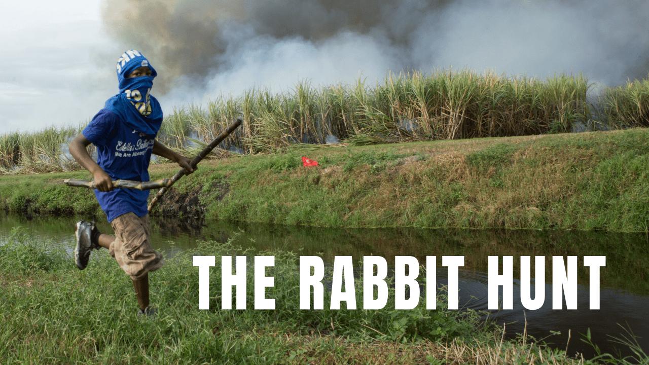 The Rabbit Hunt