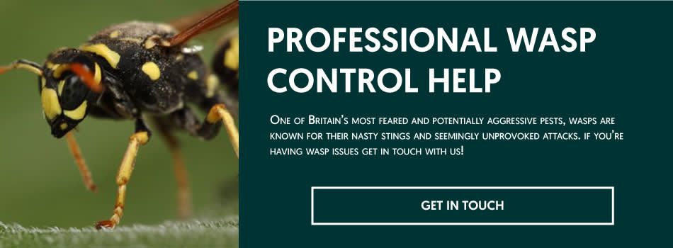 Service name: Wasp control in London