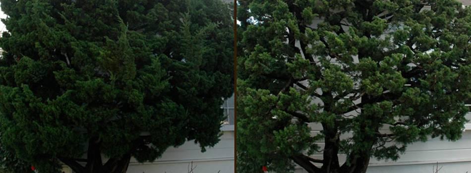Service name: Tree pruning, crown shaping, stump grinding / London
