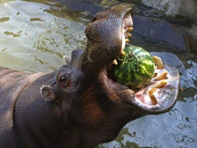Бегемоты — 3часть