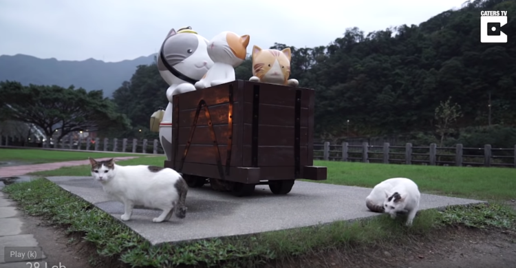 Cat village in Taiwan