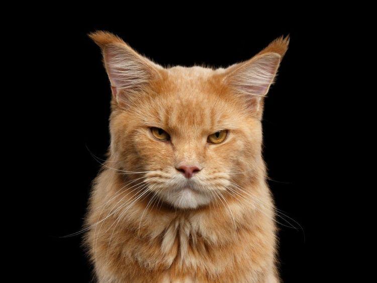 unloved cat