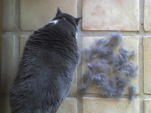 cat-shedding-fur