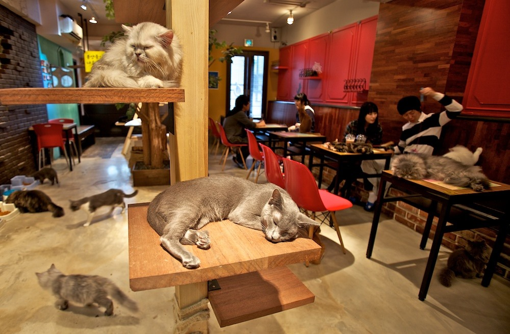 Cat cafe in south Korea