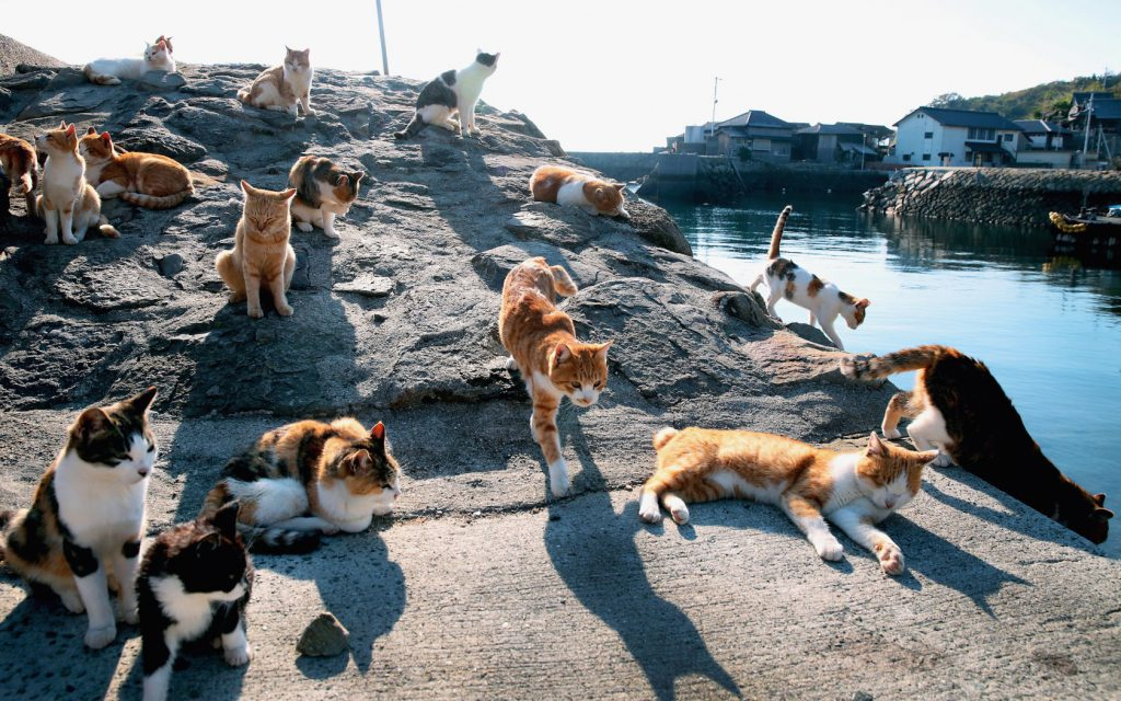 Cats Island in Japan