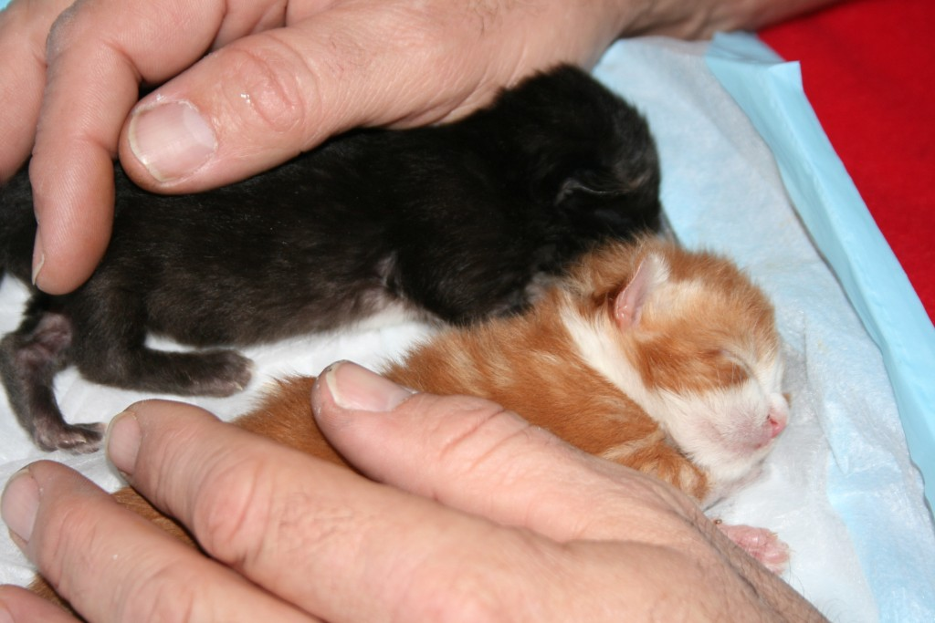 caring orphan kittens