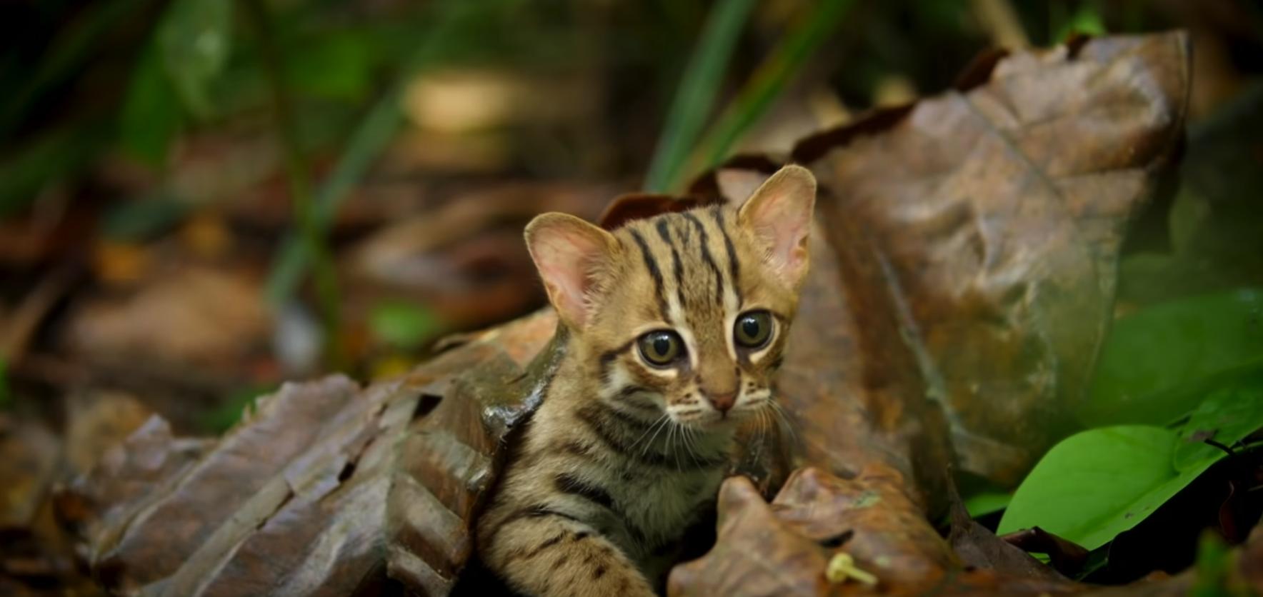 tiniest feline