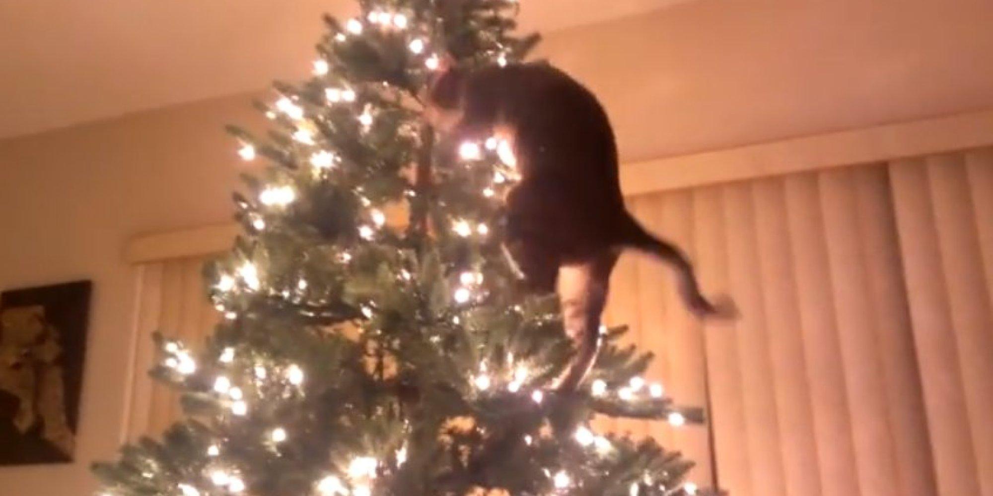 cat undressing christmas tree