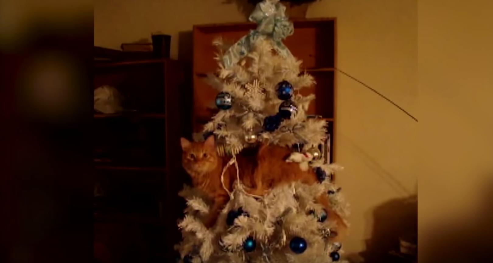 cat inside christmas tree