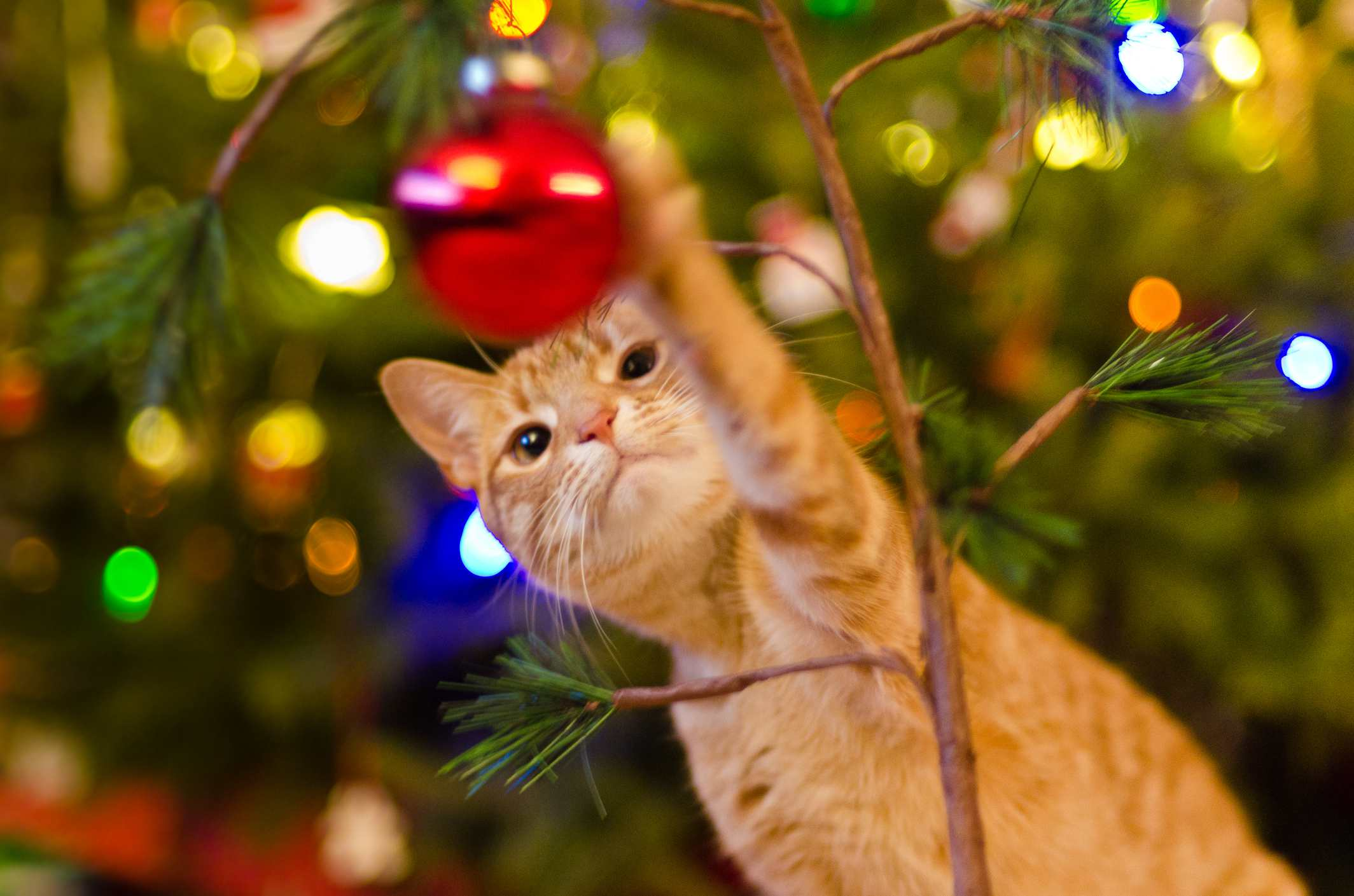 cat playing with christmas tree