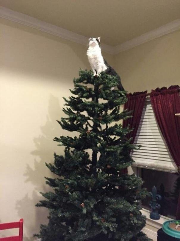 star cat on christmas tree