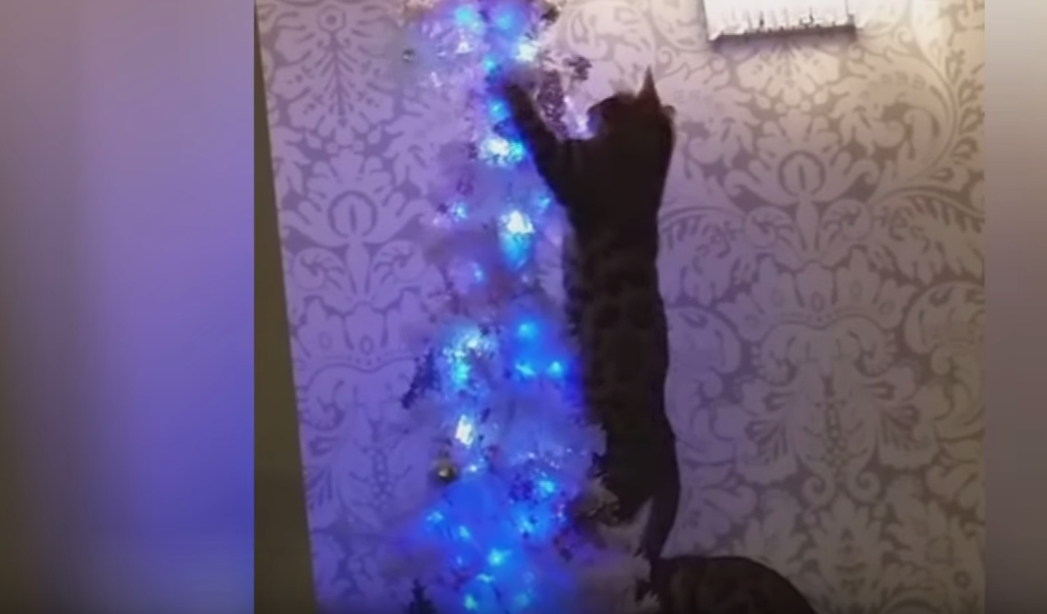 cat decorating christmas tree