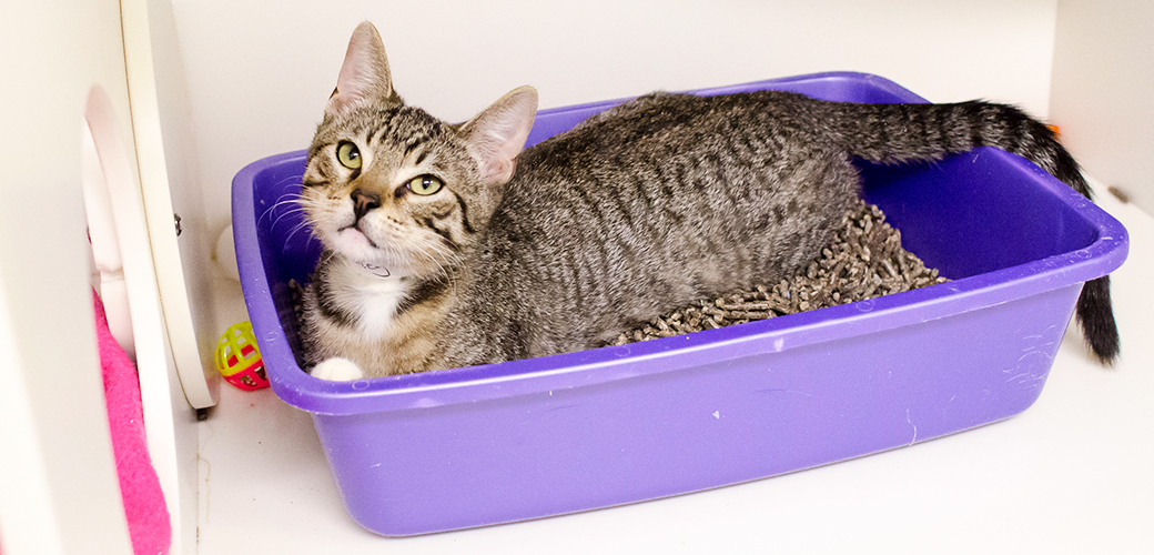 clean litter box for cat