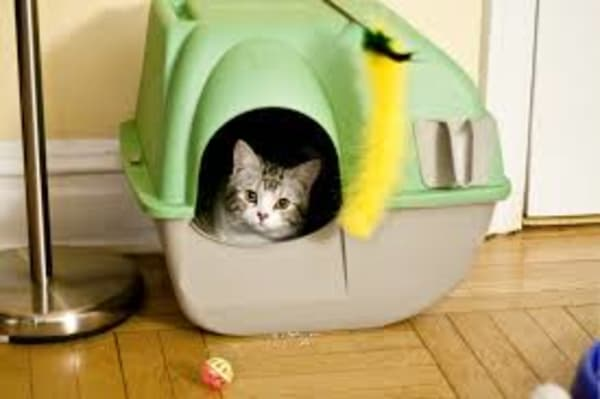 how-to-make-cat-house