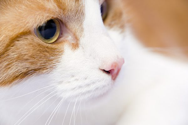 cats eyes change color with mood