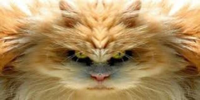 Bossy-cat