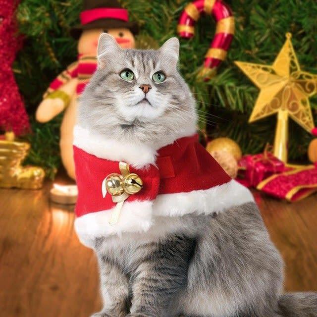 cute cat in christmas cloak