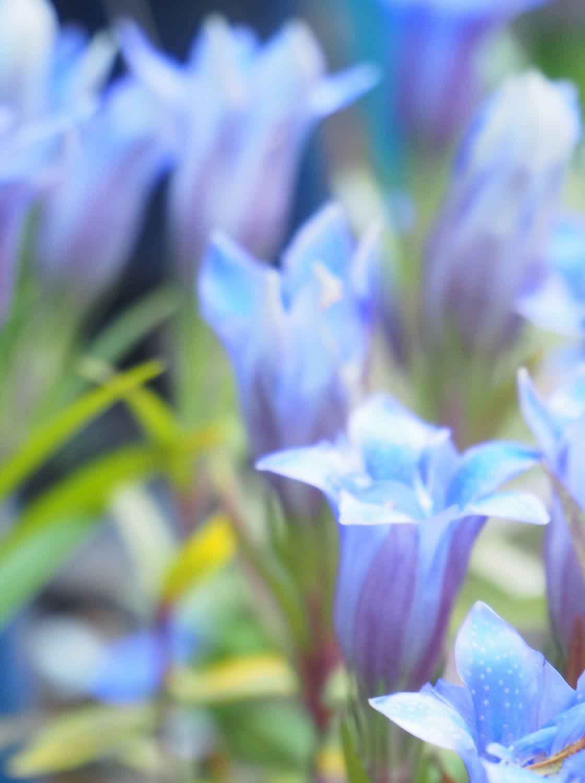bluemosaiccity
