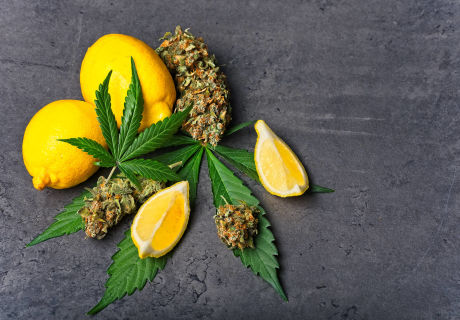 cannabis-terpenes-this-is-what-research-has-to-say