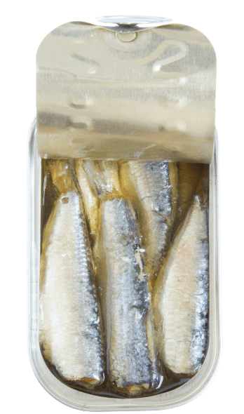 sardines in olive oil open