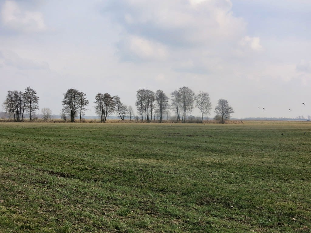 A large green field with trees in the background Description automatically generated