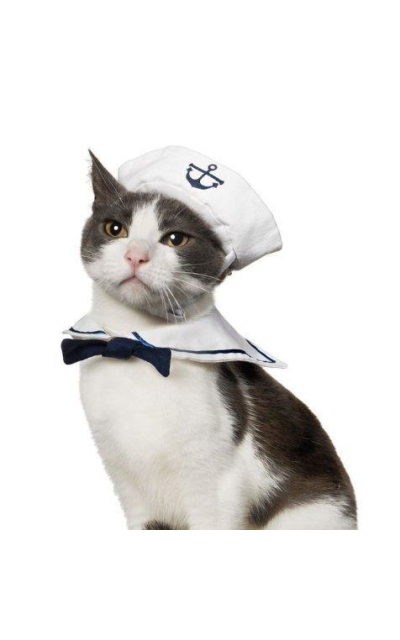 Enjoying Sailor Costume