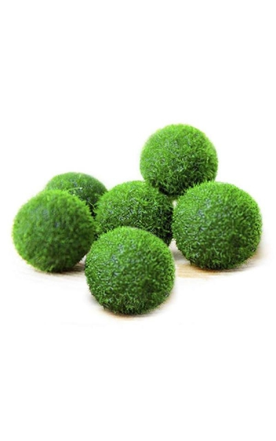 Luffy Marimo Moss Balls - Unique Green Spherical Plants