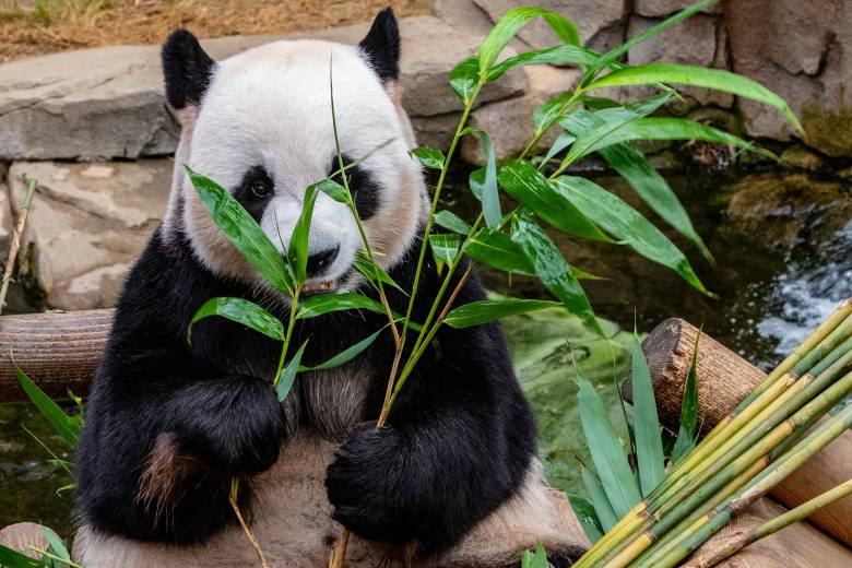 Pythonデータ解析ライブラリ【Pandas】の基本的な使い方と操作方法