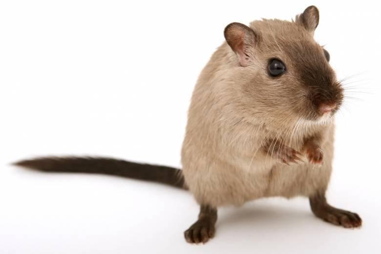 仕事がはかどるオススメのマウスと、作業を劇的に効率化させる設定を公開