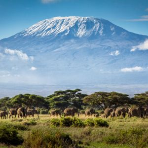 1 Day Amboseli National Park Safari
