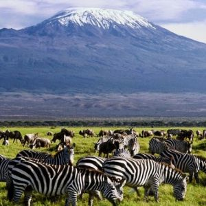3 Days Amboseli Camping Safari