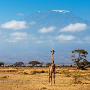 2 Days Amboseli Safari