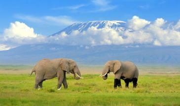 1 Day Amboseli National Park Safari