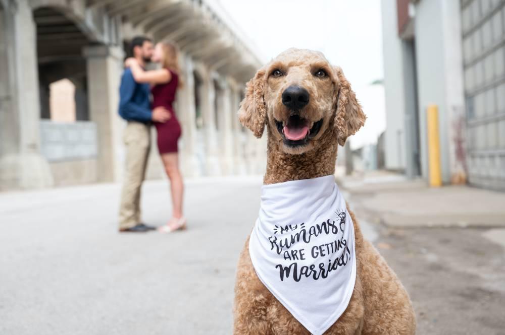engagement photos with dog with bandana