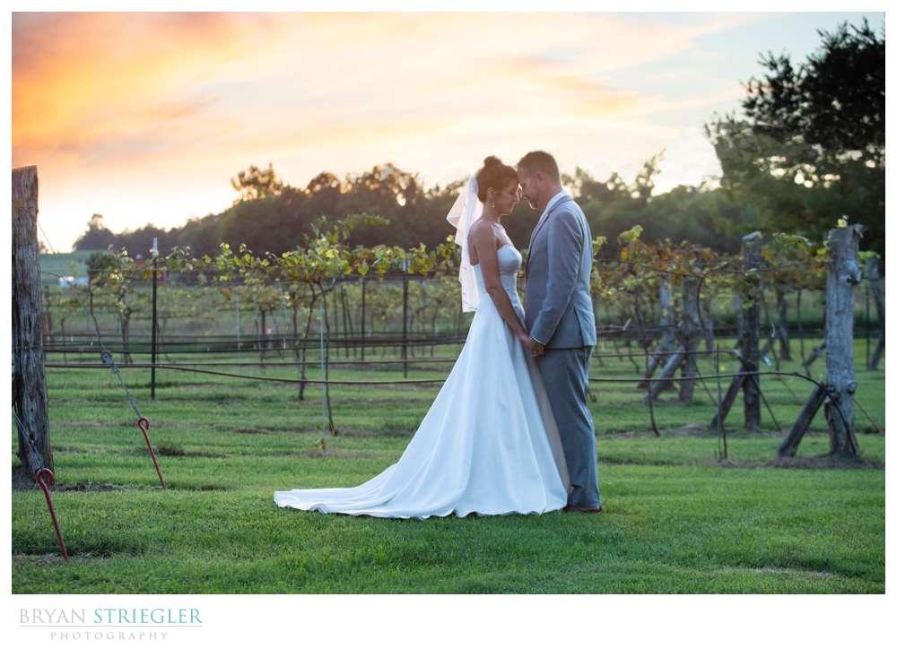 sunset photo at Sassafras Springs Vineyard