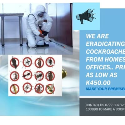Engage Pyanga for all pest termination for all your premises image