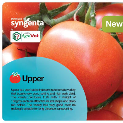Say hello to the newest Syngenta tomato! image