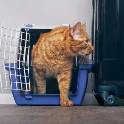 Are you relocating to another country and looking for a company that can safely export your pet? image