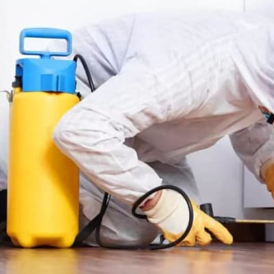 Effective removal of unwanted pests from your home or business image