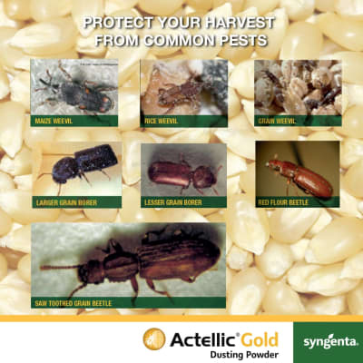 Protect your grain harvest against common pests image
