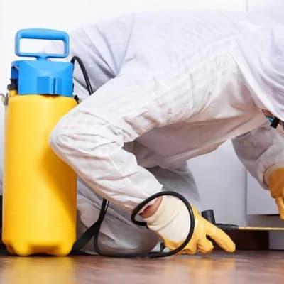 Send Pyanga Cleaning Services an enquiry today and have a pest free home! image