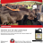 Mastrite Teat Dip available at Afrivet