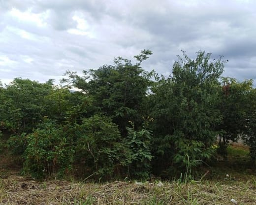 1,879m² Vacant land for sale in Roma