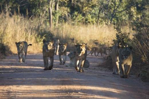 Excellent game walks in the Kafue National Park