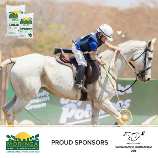 Benefits and uses of Moringa Animal Feed Supplement for horses